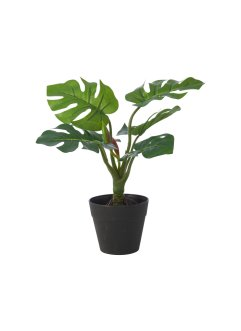 "Konstväxt ""Monstera"" (1-pack), bpc living"